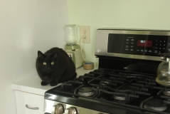 Baxter find defensive position on the stove